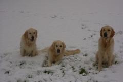 Buddy, Sky en Guus in de sneeuw